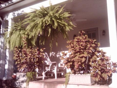 side-porch-plants